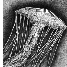 """View """"Jellyfish"""""""