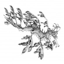 "View ""Leafy Sea Dragon"""